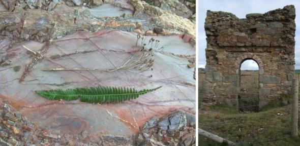 fern flower bedrock, st agnes; arch, chapel porth, cornwall (pward 2012)