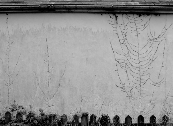 traces of ivy,  creegbrawse, cornwall (pward 2012)