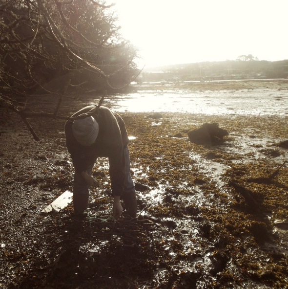 digging in the dirt, penryn (pward 2013)