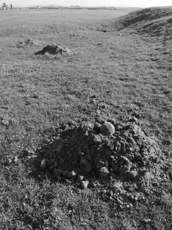molehill soil balls, northam burrows country park (p ward 2013