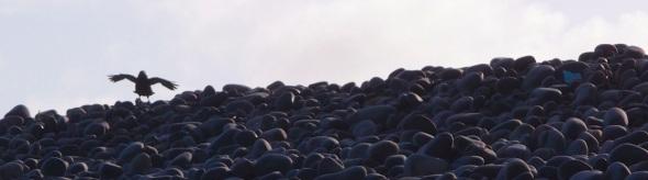 raven on the ridge, westward ho! (pward 2013)