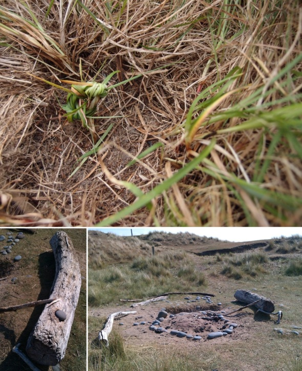 knot of grass; power place 2, northam burrows (p ward 2013)