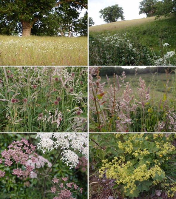nettlecombe grasses, trees and flowers, west somerset (p ward 2013)