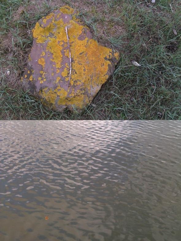 lichen stone grass, northam; leaf drifting, river torridge (p ward 2013)