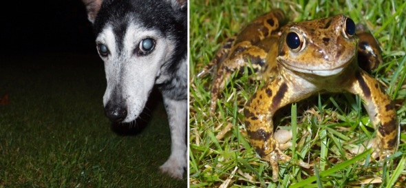 dog and frog, westward ho! (p ward 2013)