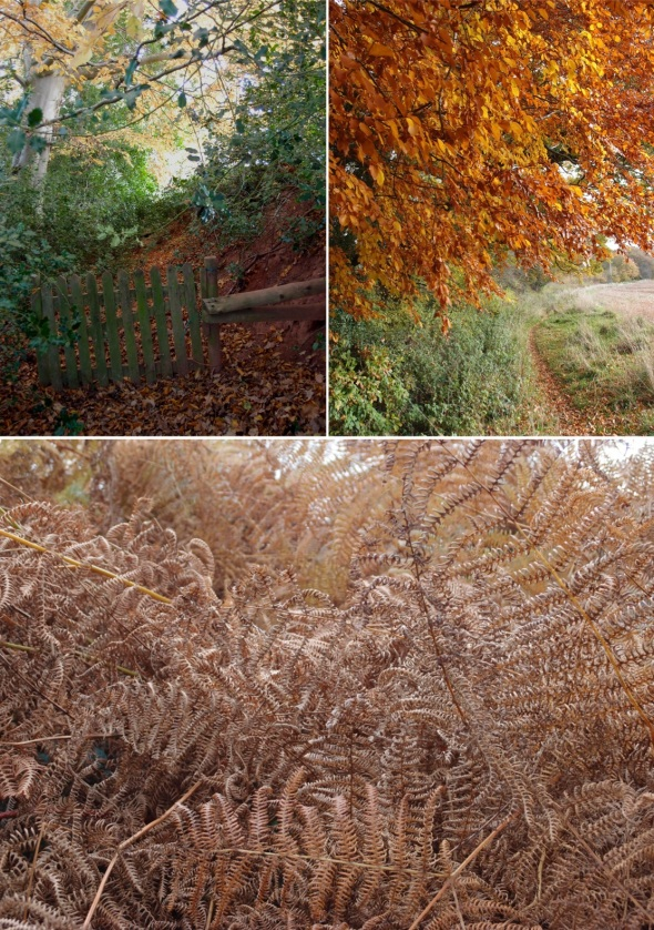 autumn walk, monksilver, west somerset (p ward 2013)