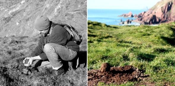 soil balls, west dale, pembrokeshire (p ward:f owen 2012)