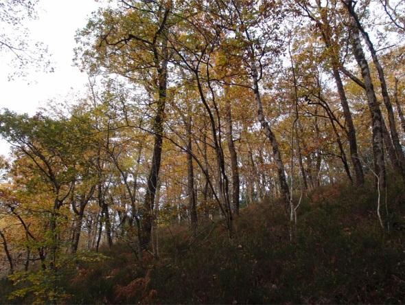 yarner wood, east dartmoor 1 (p ward 2013)