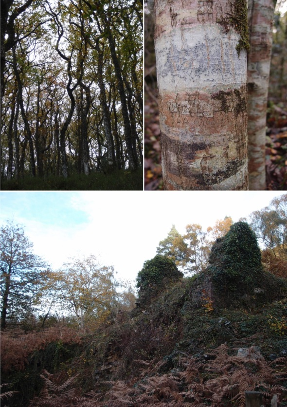yarner wood (with disused mine), east dartmoor 2 (p ward 2013)