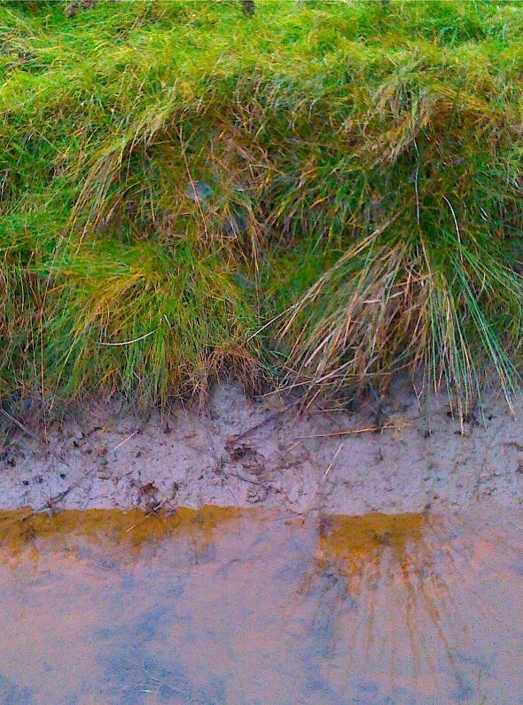 drainage ditch with iron salts, northam (p ward 2013)