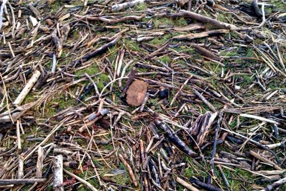 driftwood, northam burrows (p ward 2013)