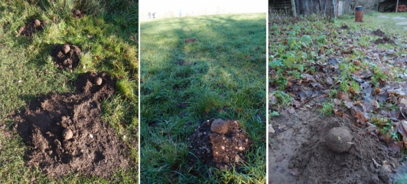 2 handfuls of soil:molehill storylines, west sussex and surrey (p ward 2013)