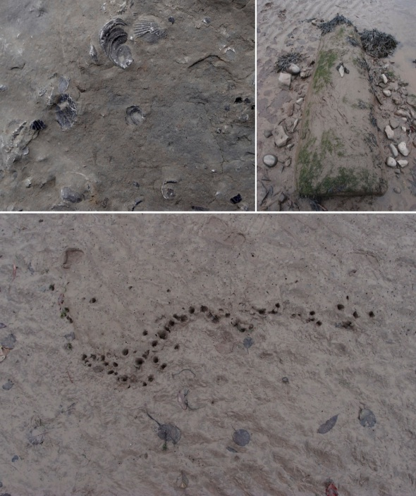 fossils; tribute to ana mendieta 2; bird feeding constellation; doniford, west somerset (pward 2013)