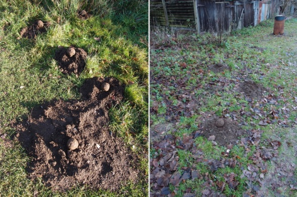 soil balls, kingley vale, west sussex and the sands, surrey (p ward 2013)