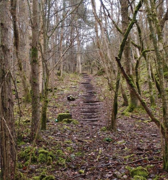 woodland stairway, cheddar gorge (p ward 2014)