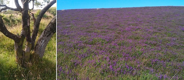 holdstone hill, combe martin (© p ward 2014)