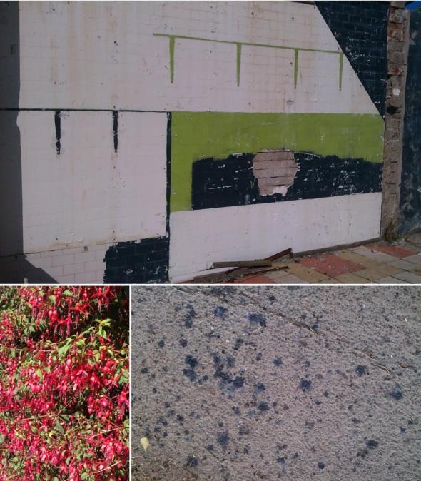 ilfracombe- derelict space, fuchsias, elderberry pavement (© p ward 2014)