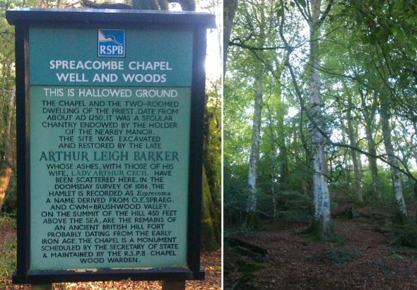 chapel woods I (© p ward 2014)