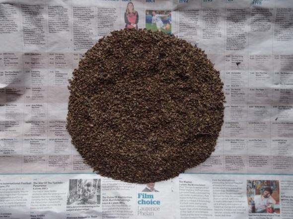 fennel seed circle (© p ward 2014)