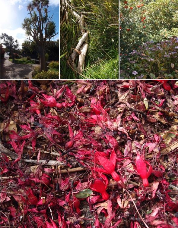 Port Erin garden I-IV © p ward 2015