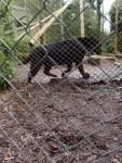 the-exmoor-best-exmoor-zoological-gardens-p-ward-2016