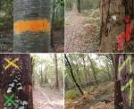 peinture d'arbres, GNAP France © peter ward2017