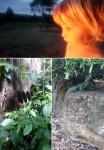 Fire, Flora and Fauna (Murrumbidgee River, Australian National Botanic Gardens), ACT © p ward2018