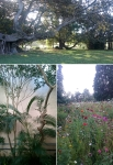 Royal Botanic Gardens, Sydney, NSW © p ward2018